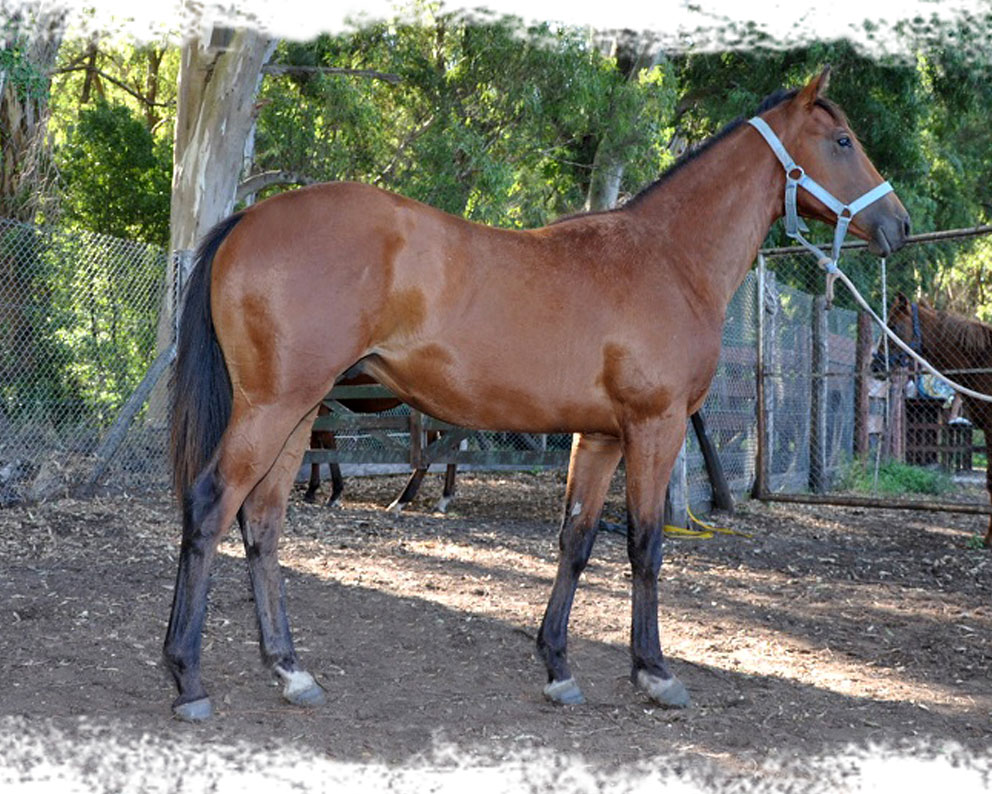 Sovereign Silk y Check This Filly